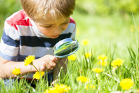 Boy with magnifying glass studying a flower
