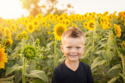 Boy in sunflower field